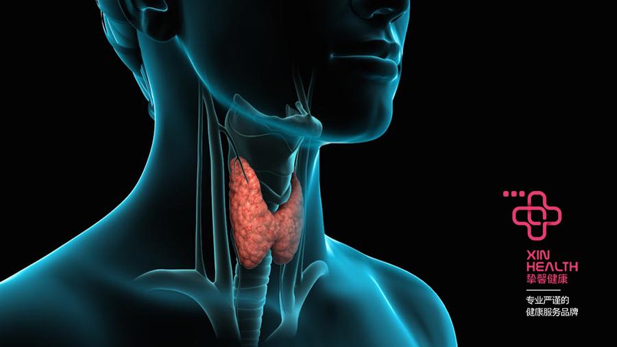 人体甲状腺构造图