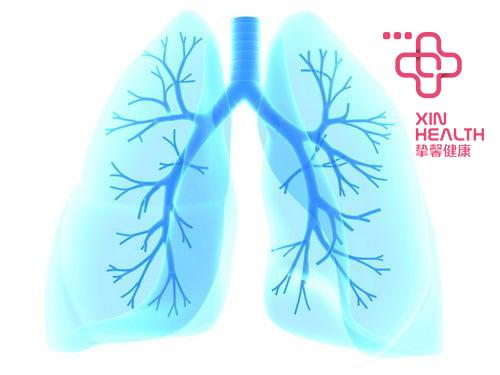 健康的肺部