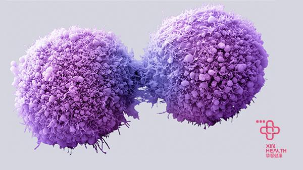 癌细胞检测过程