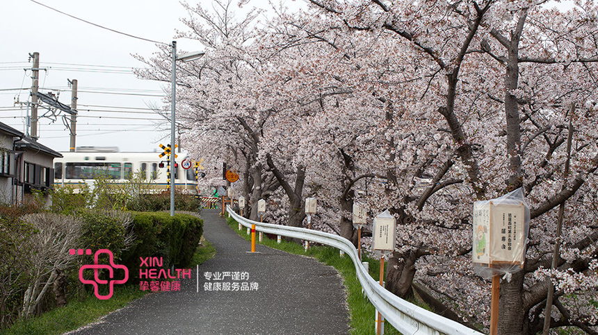 去日本看樱花再体检