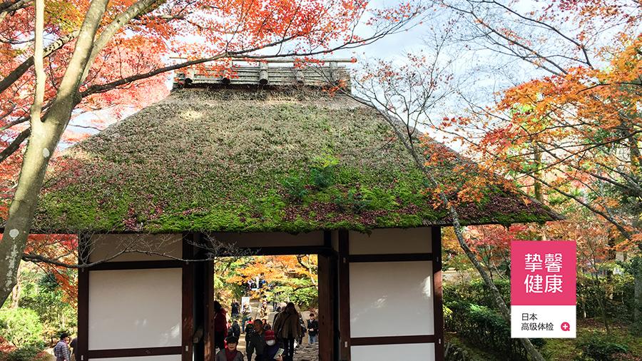 日本京都枫叶