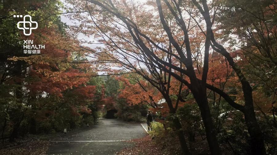 赴日旅游旺季 日本枫叶季