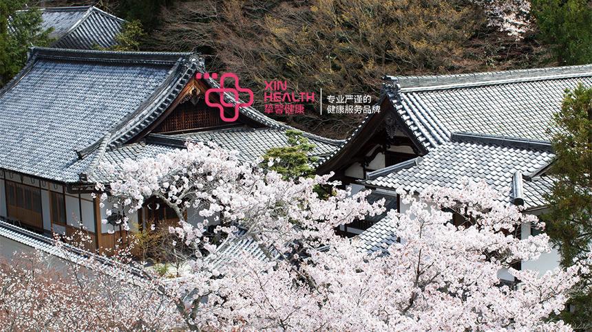 日本美丽的樱花景色