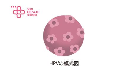 HPV细胞模式图