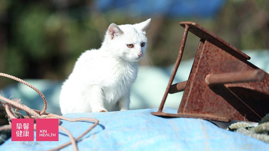琵琶湖湖中岛冲岛上的猫咪