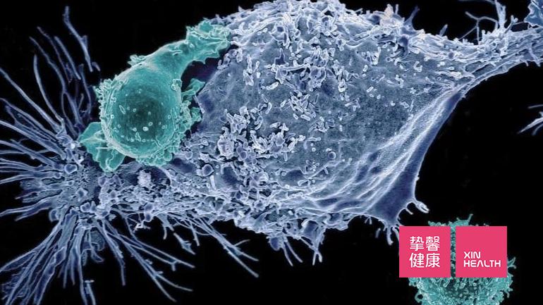 正在攻击病毒的免疫细胞