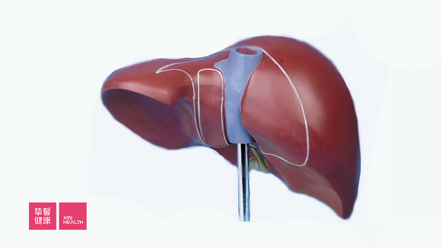 HDL 将胆固醇从人体周围组织运输到肝脏当中
