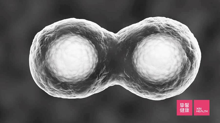 就像正常细胞分裂是有极限的