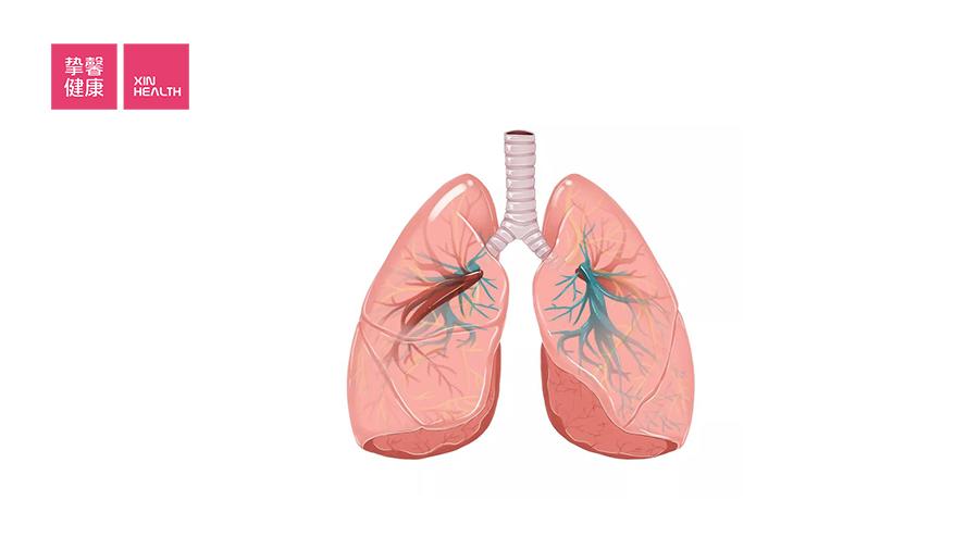 肺部主要的功能是吸入氧气排出二氧化碳