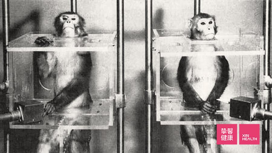 """布雷迪的""""猴子实验"""""""