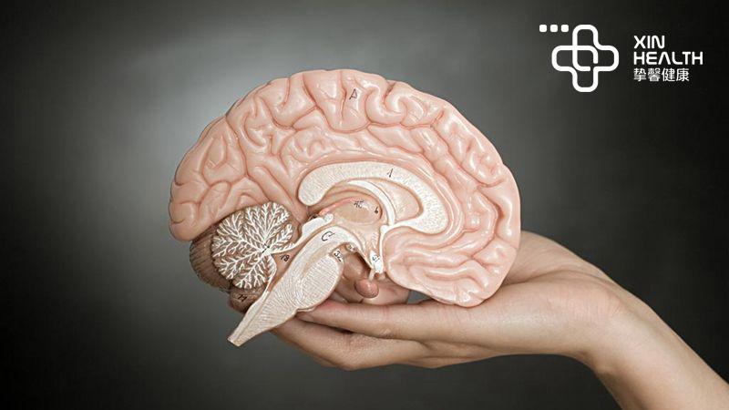 脑卒中首先会导致大脑供血不足