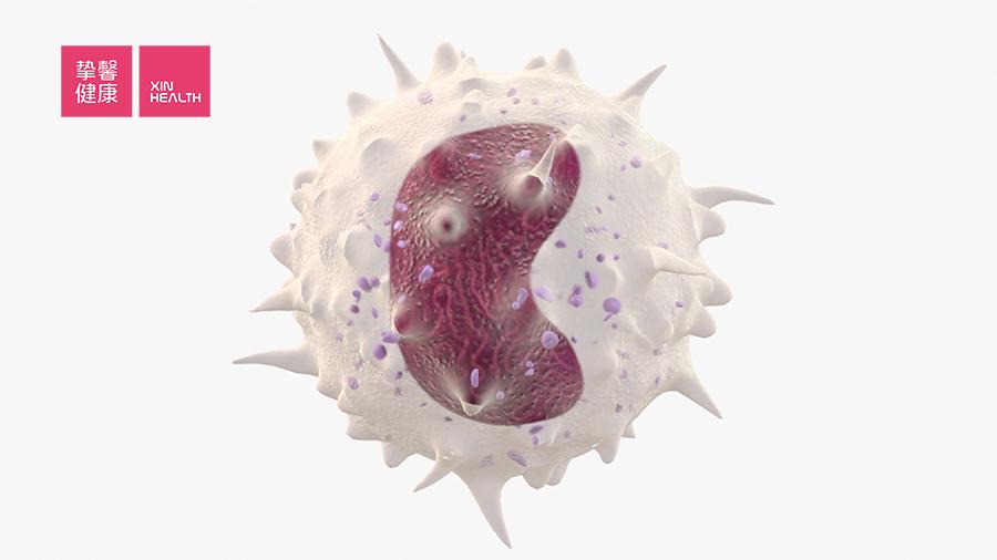 乙肝肝炎主要是由白细胞大量摧毁肝细胞造成的