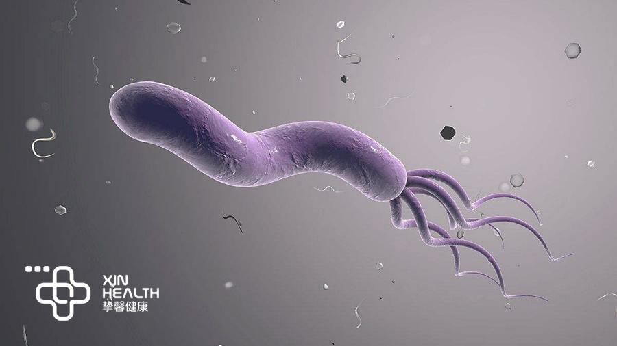 显微镜下的幽门螺杆菌