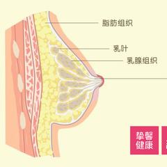 乳房检查什么时候合适?乳房疼痛如何诊断?