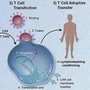 什么是癌症免疫疗法 CAR-T(下)